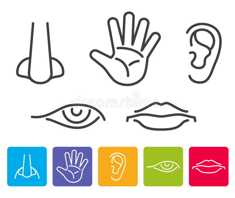 Fünf menschliche Richtungen riechen, visieren an und hören, Geschmack, Notenvektorikonen vektor abbildung