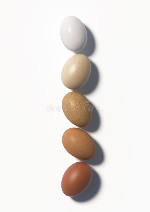 Fünf multi farbige Hühnereien liegen in Folge auf einem weißen Hintergrund Beschneidungspfad eingeschlossen 3d übertragen stock abbildung