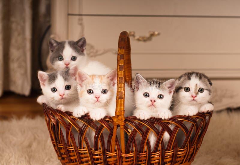 Fünf nette Kätzchen in umsponnenem Korb lizenzfreie stockbilder