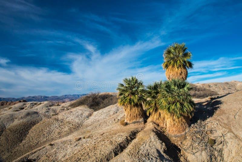 Fünf Palmen stockbild