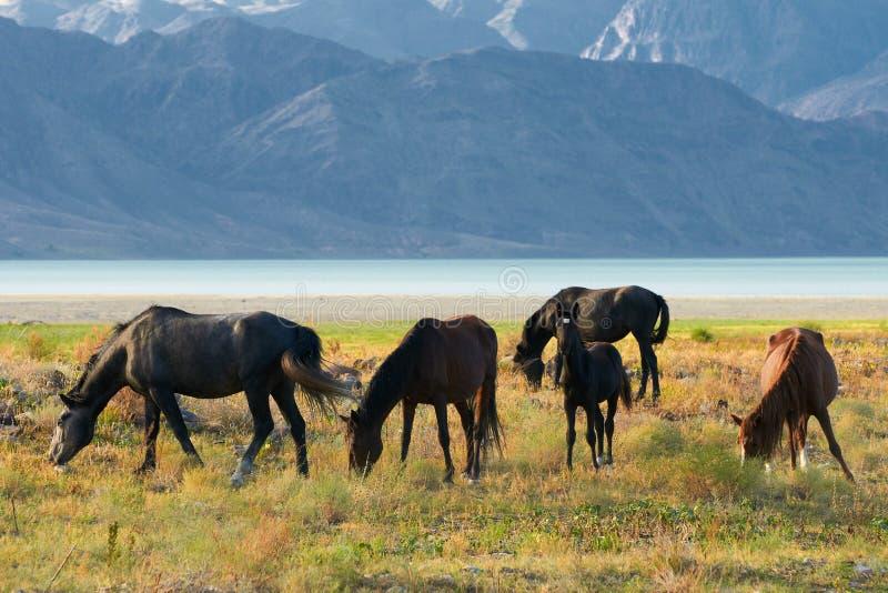 Fünf Pferde lizenzfreies stockbild