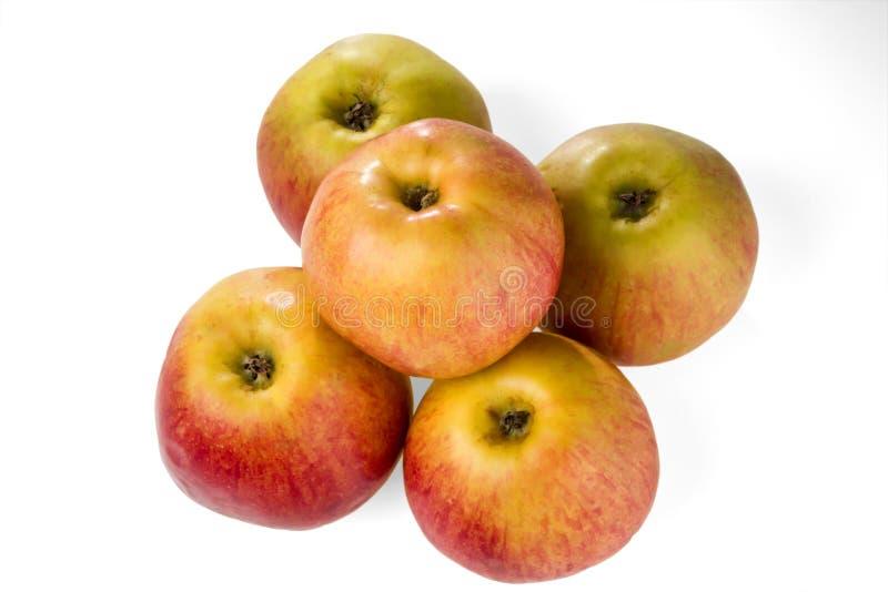 Fünf reife gelb-rote Äpfel lokalisiert auf weißem Hintergrund lizenzfreie stockfotos