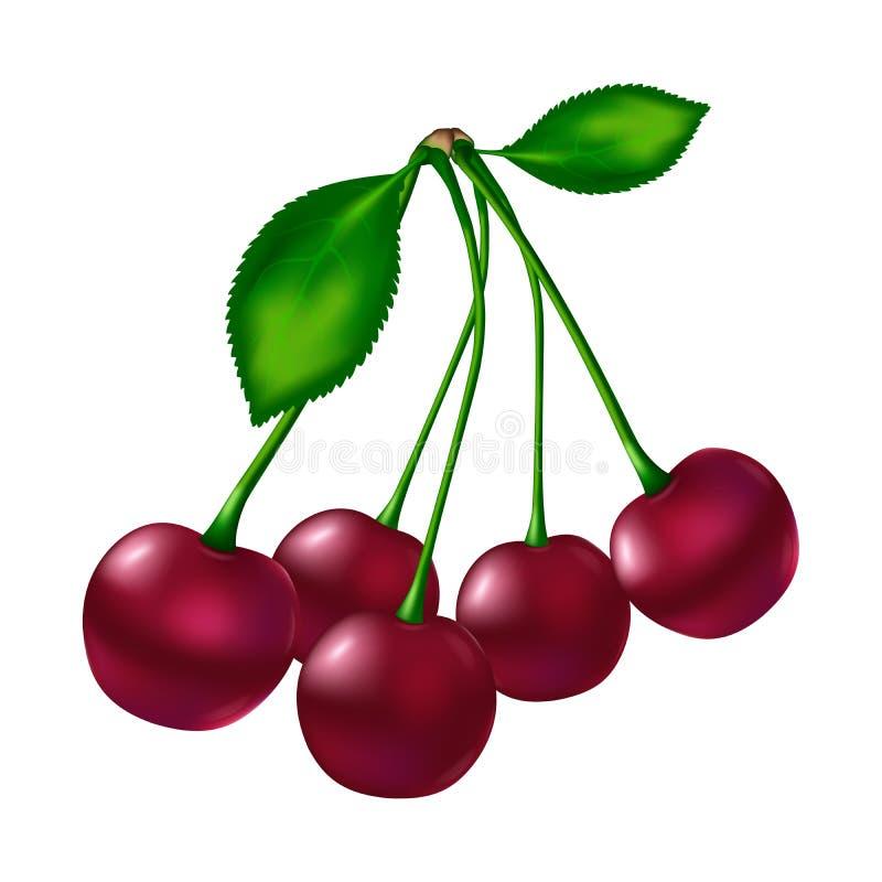 Fünf rote reife Kirschen mit Stamm und mit zwei grünen Blättern vektor abbildung