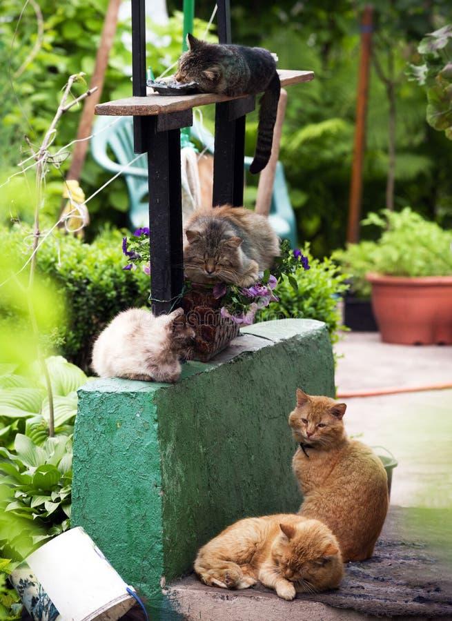 F?nf verschiedene Katzen schlafen auf dem Portal einer H?tte lizenzfreies stockbild