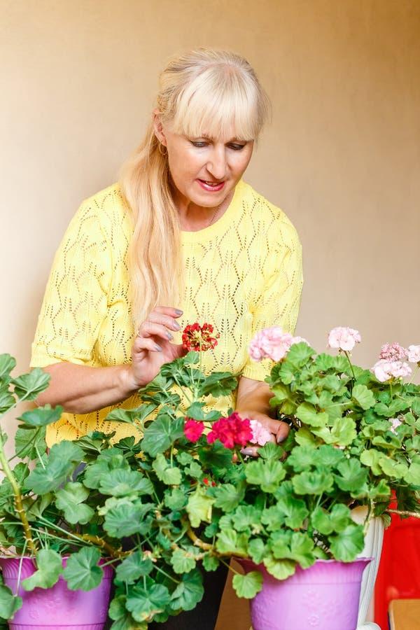 Fünfzigjährige schöne kaukasische Frau und blühende Pelargonie in den Töpfen lizenzfreies stockbild