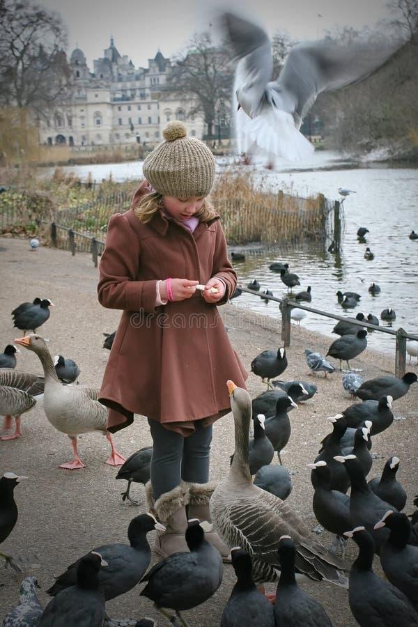 Fütterung der Vögel stockfotografie