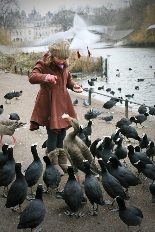 Fütterung der Vögel lizenzfreies stockbild
