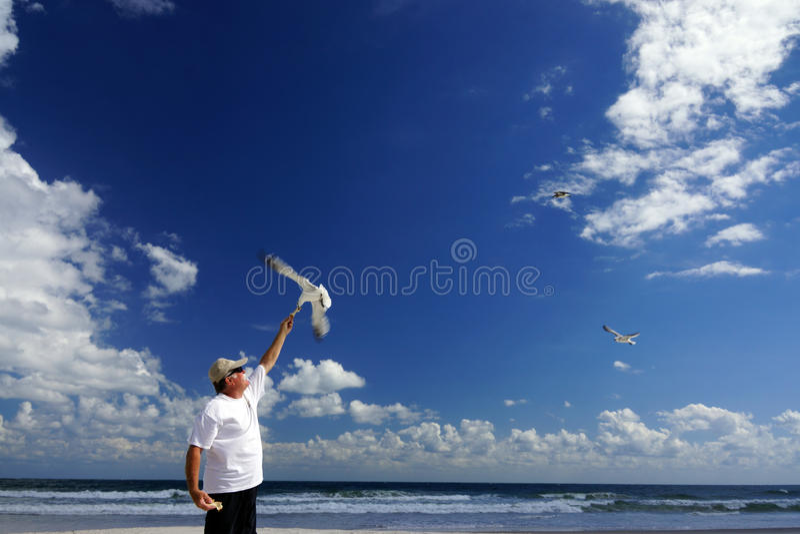 Fütterung der Vögel stockbilder