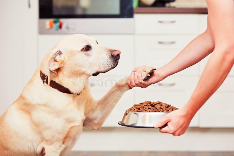 Fütterung des hungrigen Hundes stockbild