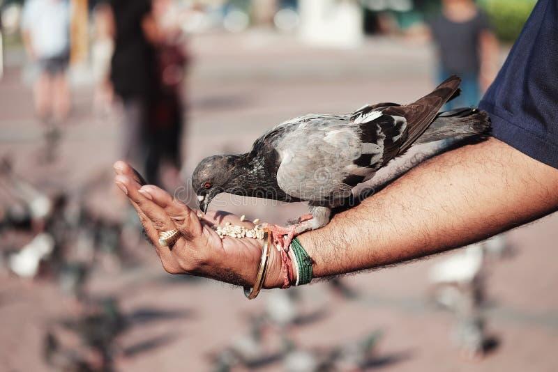 Fütterung eines Vogels lizenzfreies stockfoto