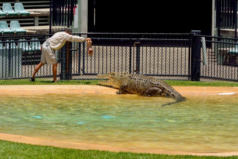 Fütterungskrokodil des Mannes während der Krokodilshow am Zoo in Australien lizenzfreie stockfotos