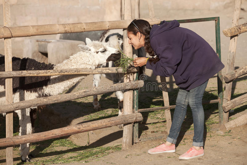Fütterungslama der jungen Frau im Safari-Park lizenzfreie stockbilder