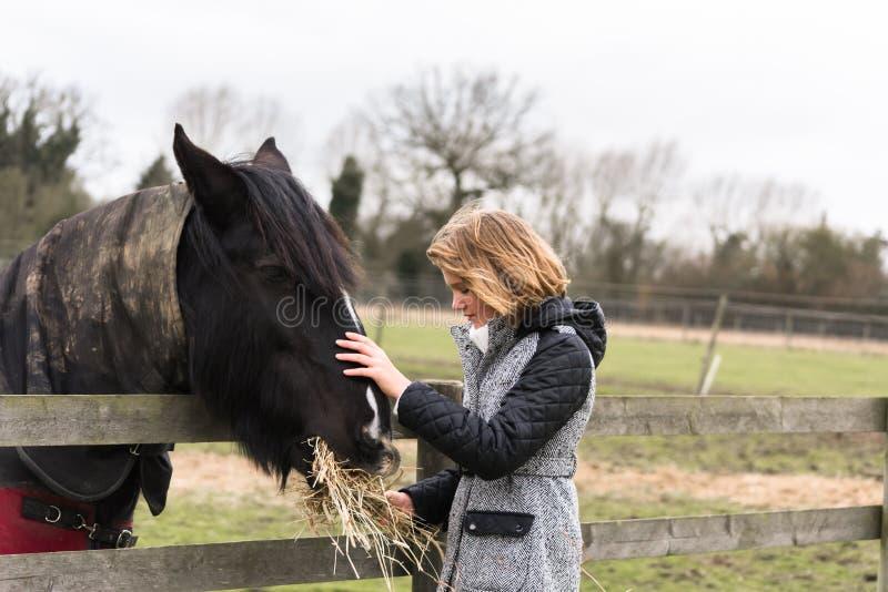 Fütterungspferd des jungen Mädchens stockfotos