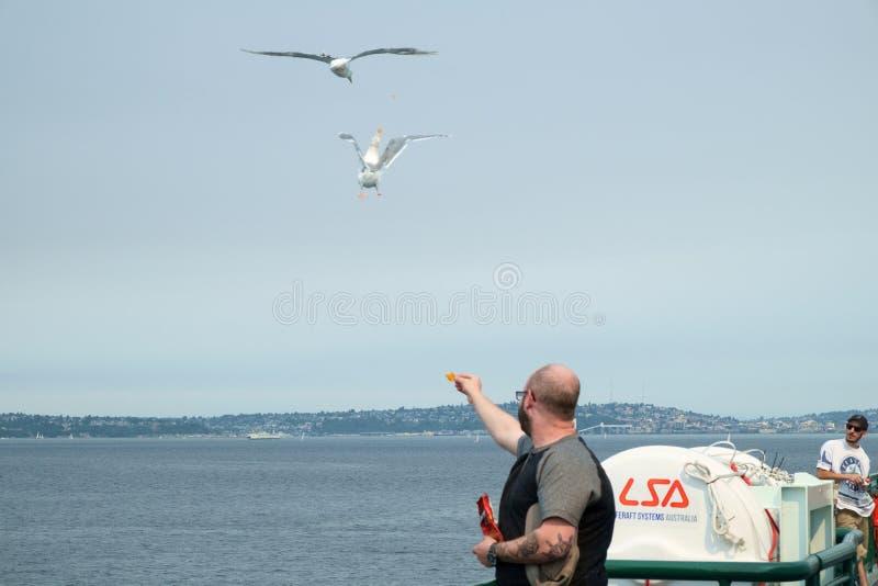 Fütterungsseemöwen des Mannes im Flug lizenzfreie stockfotos