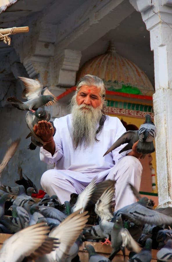 Fütterungstauben des indischen Mannes nähern sich heiligem See, Pushkar, Indien stockbilder