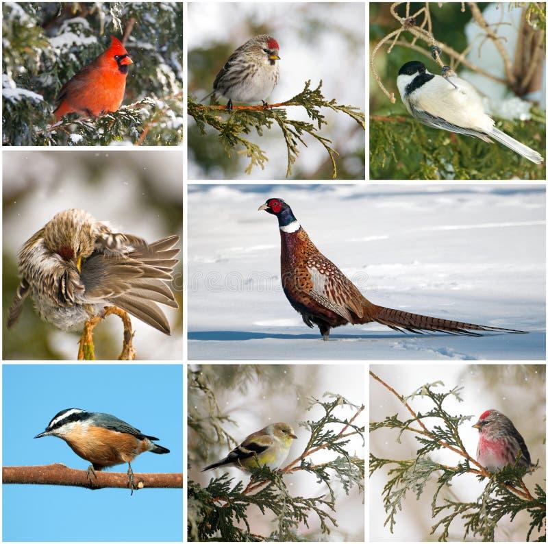 fågelcollagevinter royaltyfri fotografi