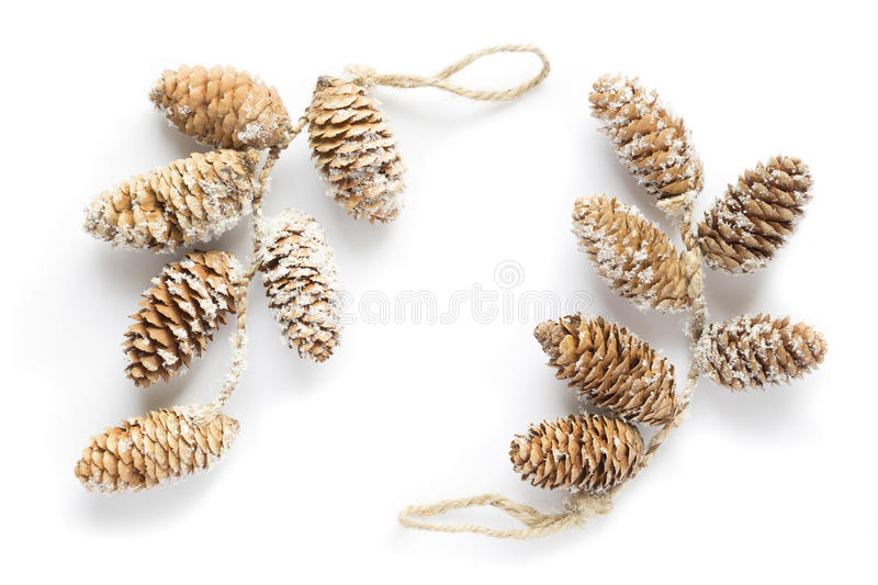 Download F branch with cone stock photo. Image of seasonal, pine - 35095484