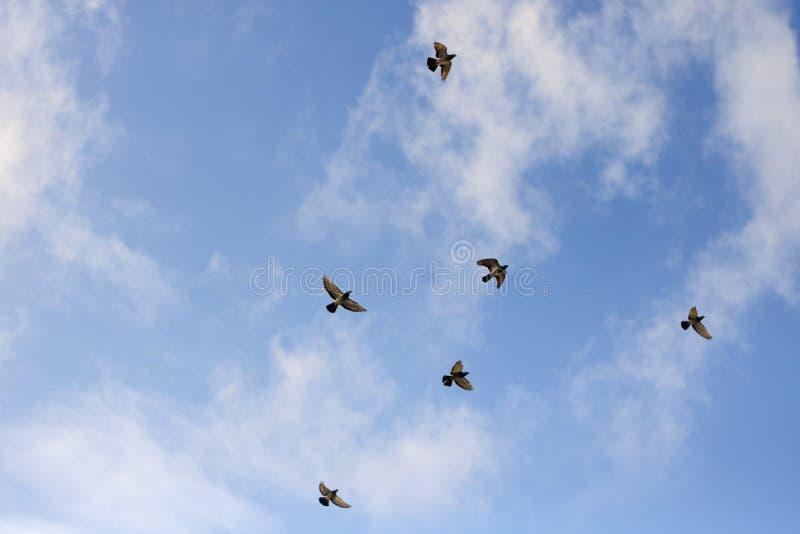 F?glar i skyen royaltyfria foton