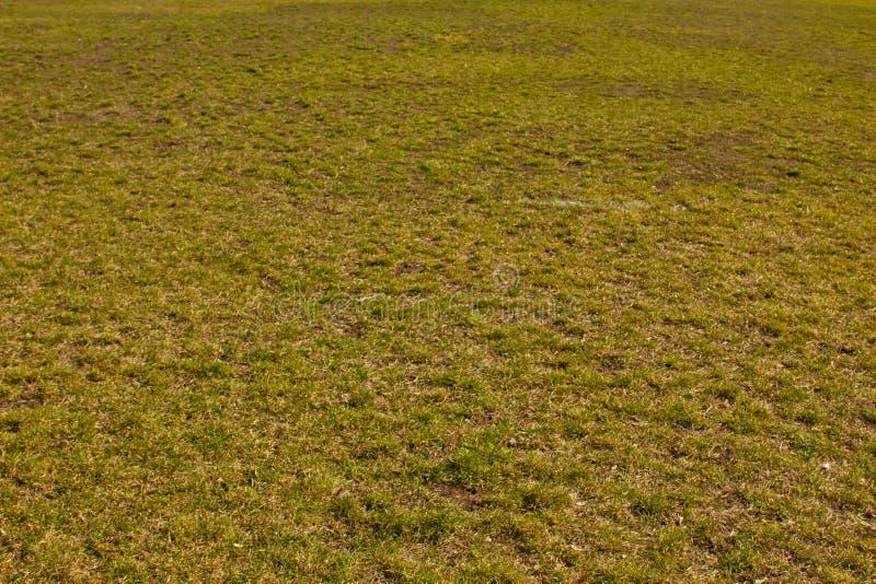 F?lt av gr?nt fint gr?s p? jordningen Kort gr?smatta bakgrundstexturcloseup royaltyfria foton