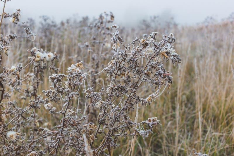 F?lt av gr?s och blommor som t?ckas med rimfrost royaltyfri foto