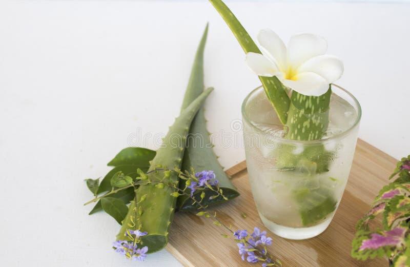 F?r aloevera f?r v?xt- sund drink kallt vatten coctail royaltyfria foton