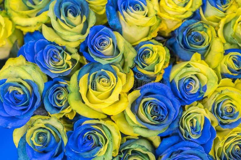 f?r bl?a f?r begrepp ukrainsk b?sta sikt och gula rosor Utsmyckade gula och bl?a rosor fantastiska blommor Bl?a och gula blommor  royaltyfria bilder