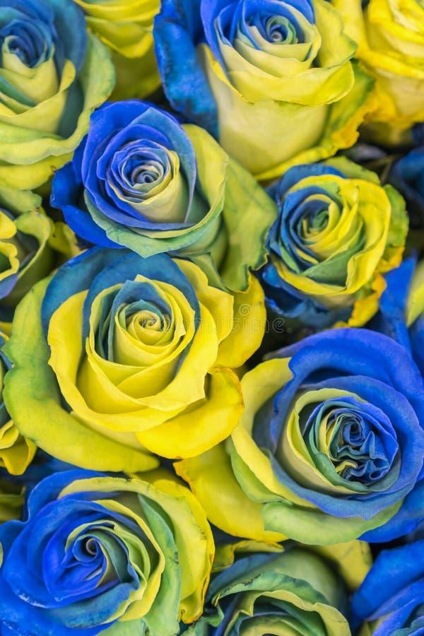 f?r bl?a f?r begrepp ukrainsk b?sta sikt och gula rosor Utsmyckade gula och bl?a rosor fantastiska blommor bl? yellow royaltyfri foto