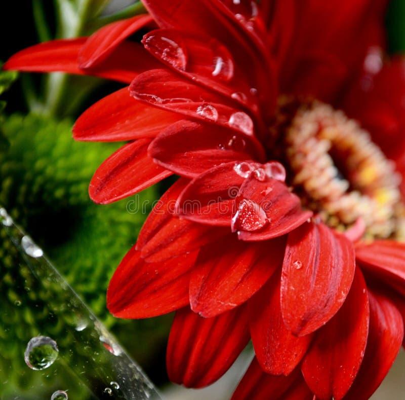 F?r die Liebe von Blumen stockfotografie