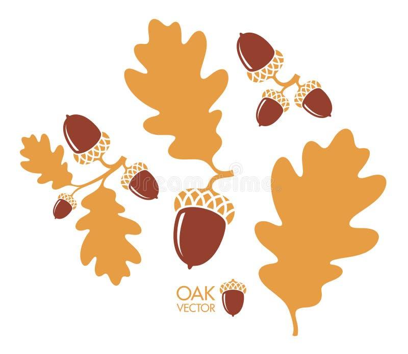 f?r formatillustrat?r f?r 8 extra eps tree f?r oak kli Isolerade ekollonar och sidor på vit bakgrund royaltyfri illustrationer