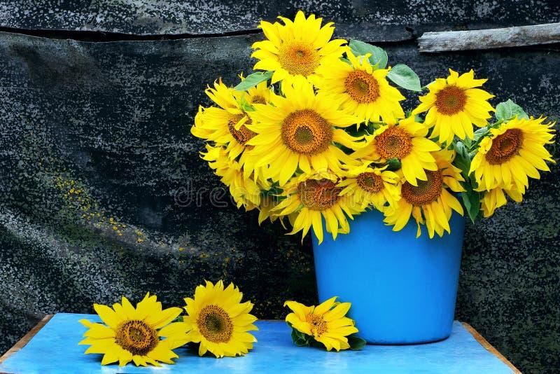 f?r livstid solrosor fortfarande bukett av solrosor i en hink lantlig stilleben för tappning med blommor grungelivstid fortfarand fotografering för bildbyråer