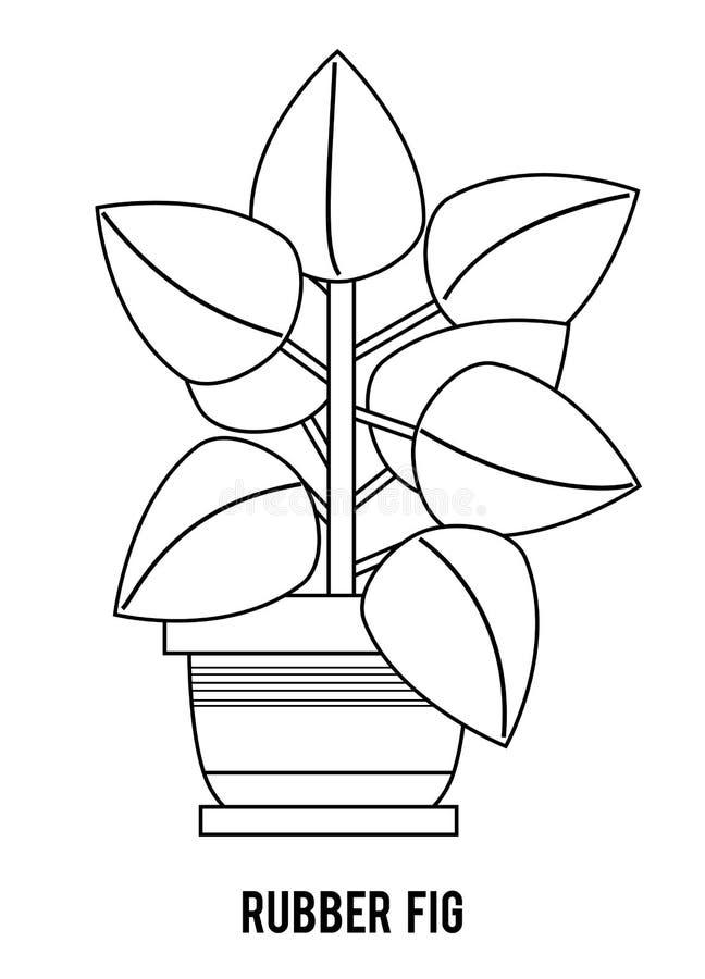 f?r f?rgl?ggningdiagram f?r bok f?rgrik illustration Tecknad filmsamling av Houseplants, gummifikonträd arkivfoton