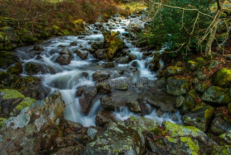 F?r skogflod f?r vattenfall gr?nt landskap f?r str?m arkivbild
