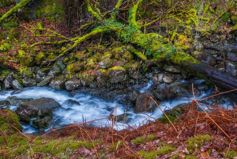 F?r skogflod f?r vattenfall gr?nt landskap f?r str?m arkivbilder