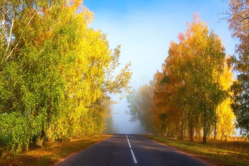 f?r v?gsun f?r h?st rider ut gr?na trees yellow Sceniska gula träd längs asfalthuvudvägen royaltyfri foto