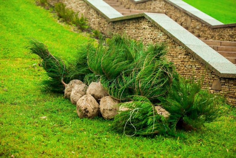 F?rberedelsen f?r att plantera tr?d och buskar i det stads- parkerar omr?de arkivfoton