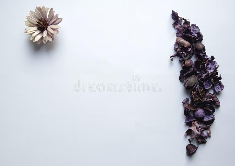 F?rbluffa den purpurf?rgade blomman och sidor med vit bakgrund royaltyfria bilder