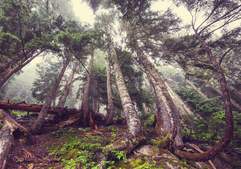 f?rdunkla skogen arkivfoto