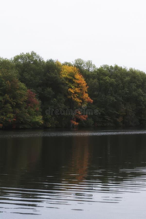 F?rgrik h?st-/nedg?ngl?vverk i en skog p? en sj? i New England F?rger av r?d orange och gr?nt arkivfoto