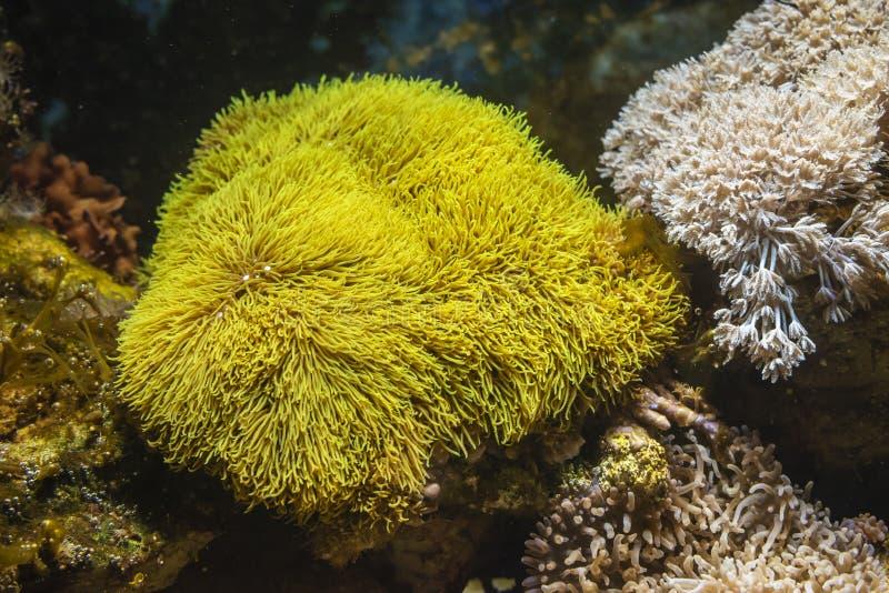 f?rgrik korallrev arkivbild