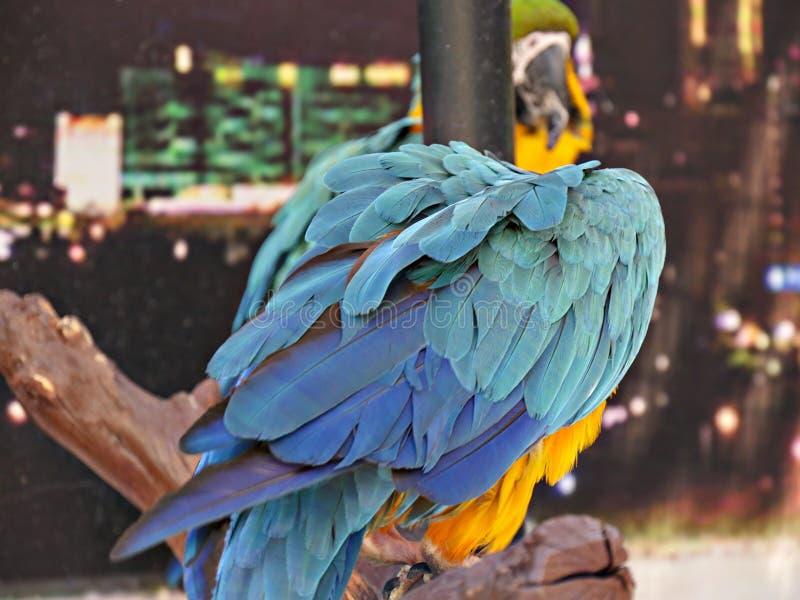 F?rgrik papegoja fotografering för bildbyråer