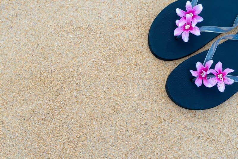F?rgrika flipmisslyckanden p? den sandiga stranden Svarta häftklammermatare med en rosa blomma på sanden arkivfoton