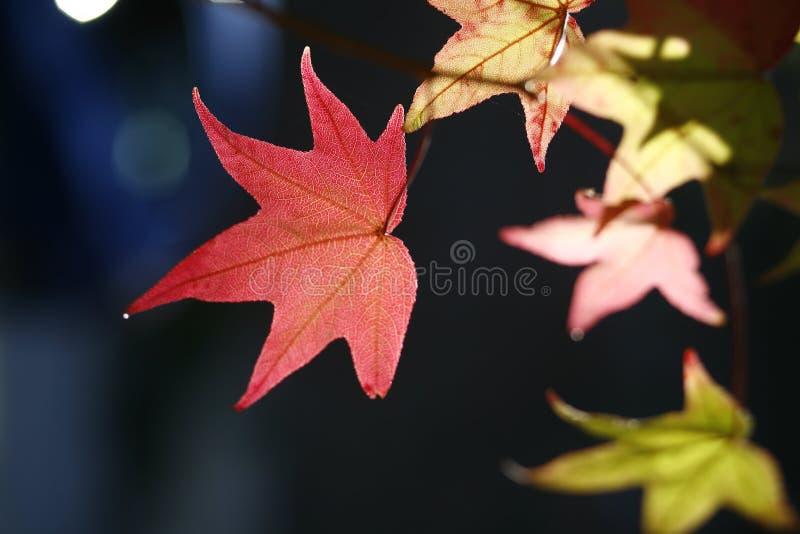 f?rgrika leaves f?r h?st royaltyfri bild