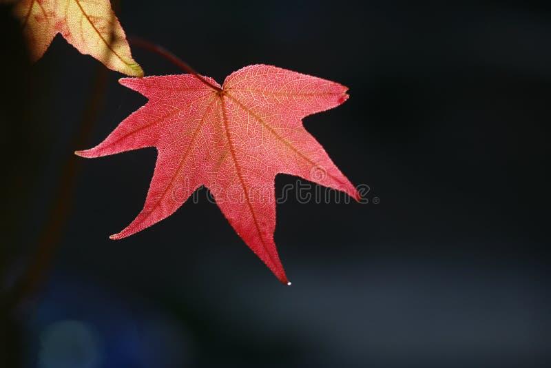 f?rgrika leaves f?r h?st royaltyfria foton