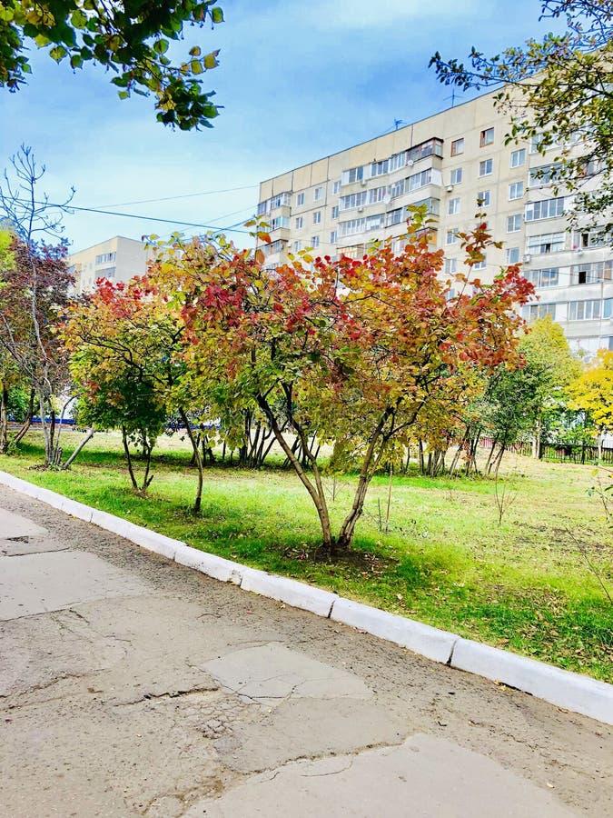 F?rgrikt l?mnar, trees, lawn, Etc royaltyfri foto