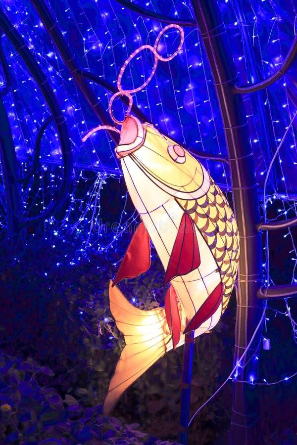Fôrma chinesa da lanterna da carpa fotos de stock royalty free