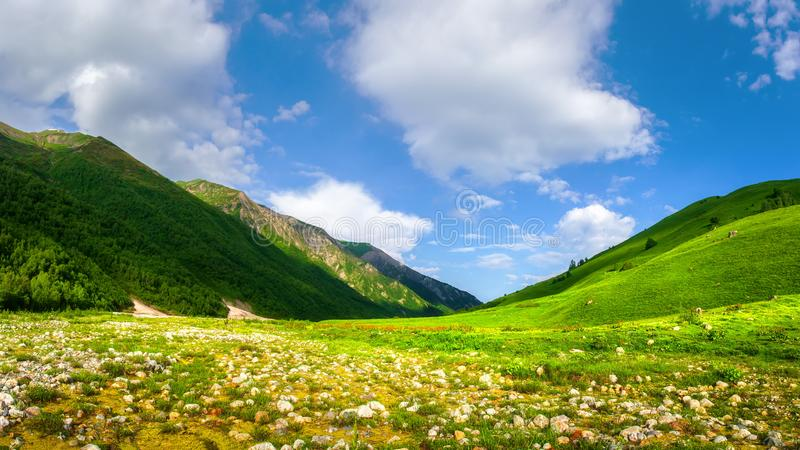 f?rst?r element menar naturen f?r resabergberg att driva havssommarvatten som dig Alpin gr?n dal Bergnaturlandskap med den gr?s-  royaltyfri fotografi
