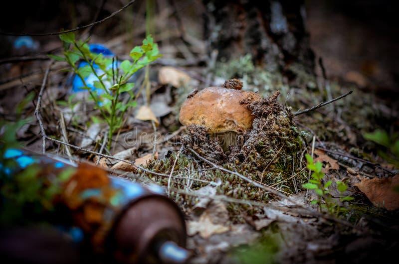 F?rst?relse av naturen Den vita champinjonen växer i en nedgrävning av sopor av giftlig hushållavskräde i skogen arkivbilder