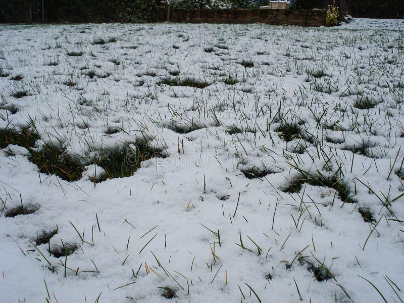F?rsta sn? och gr?s Begreppsm?ssigt foto av v?ren som g?r efter vinter v?xande snow f?r gr?s arkivbild