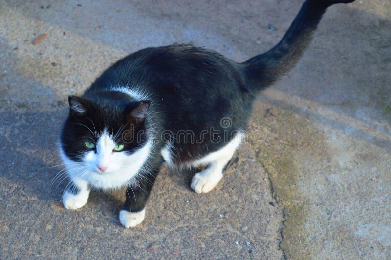 F?rtjusande katt med gr?na ?gon royaltyfri bild