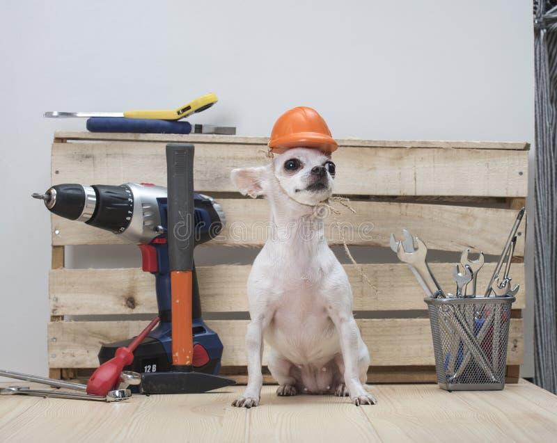 F?te du travail heureuse Outils de construction Un chien de la race de chiwawa images stock